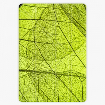 Pouzdro iSaprio Smart Cover - Leaves - iPad Air